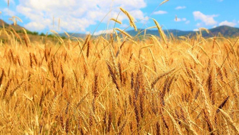 Rusya'dan buğday ithalatı ve Türkiyeye getirilmesi